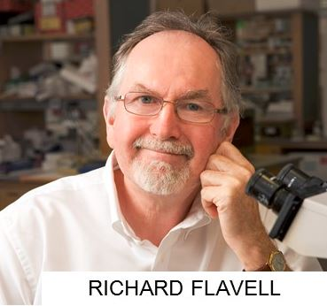 FLAVELL